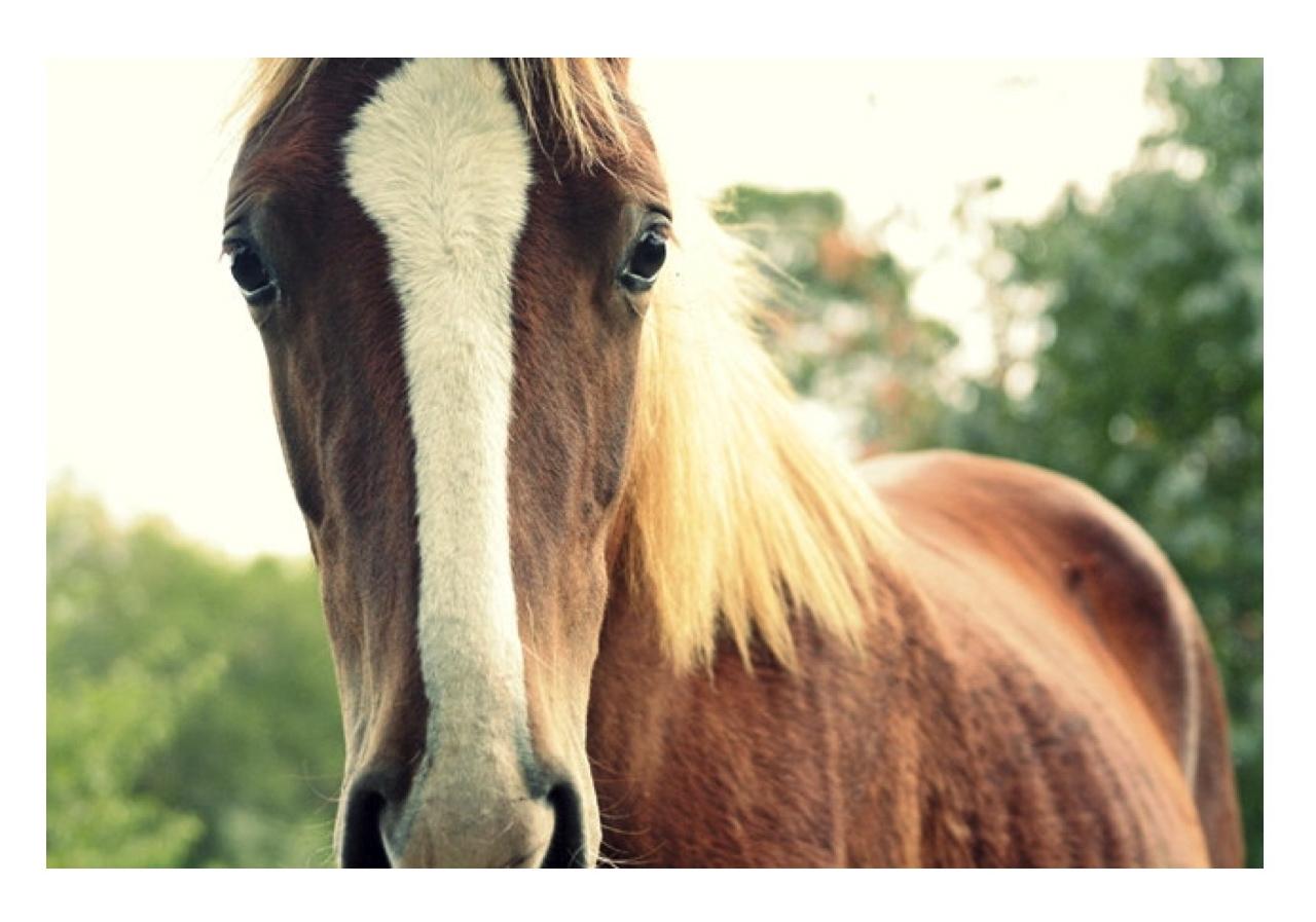 In Esteem Of The Elegant Horse Equestrian Inspired
