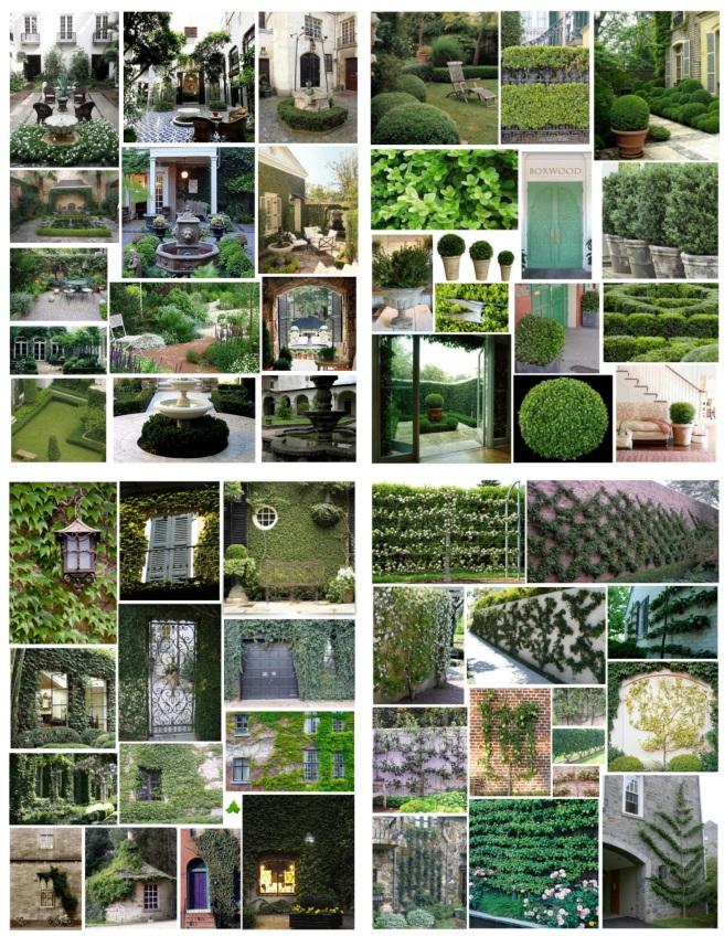Courtyard/Boxwood/Ivy/Espalier