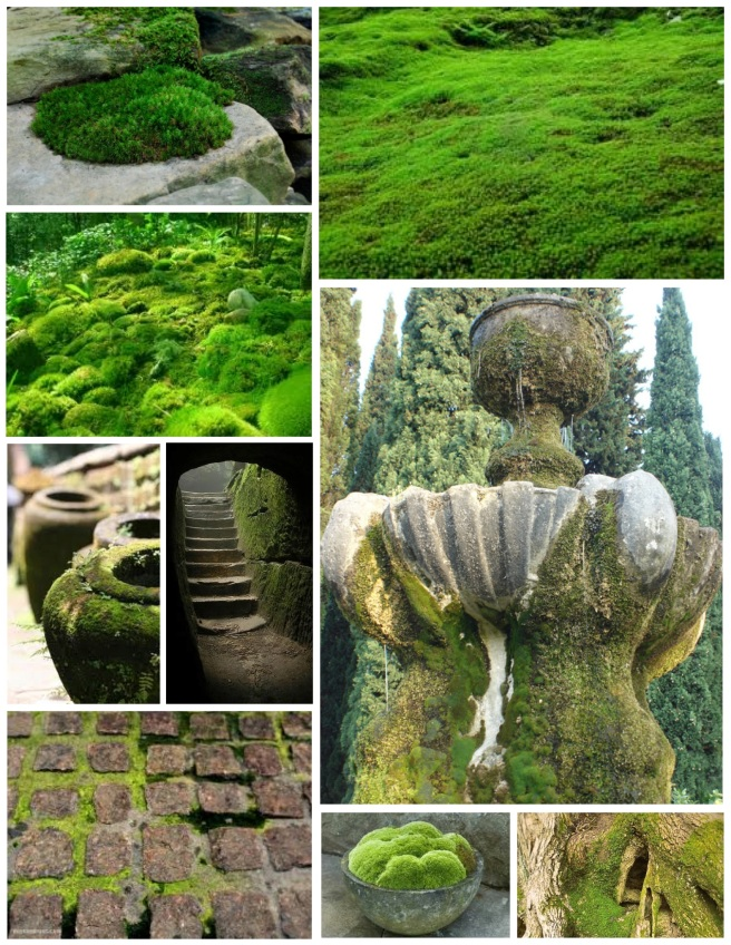"""Moss"":  Botanical Herbaceous Plants Of Green Allure"