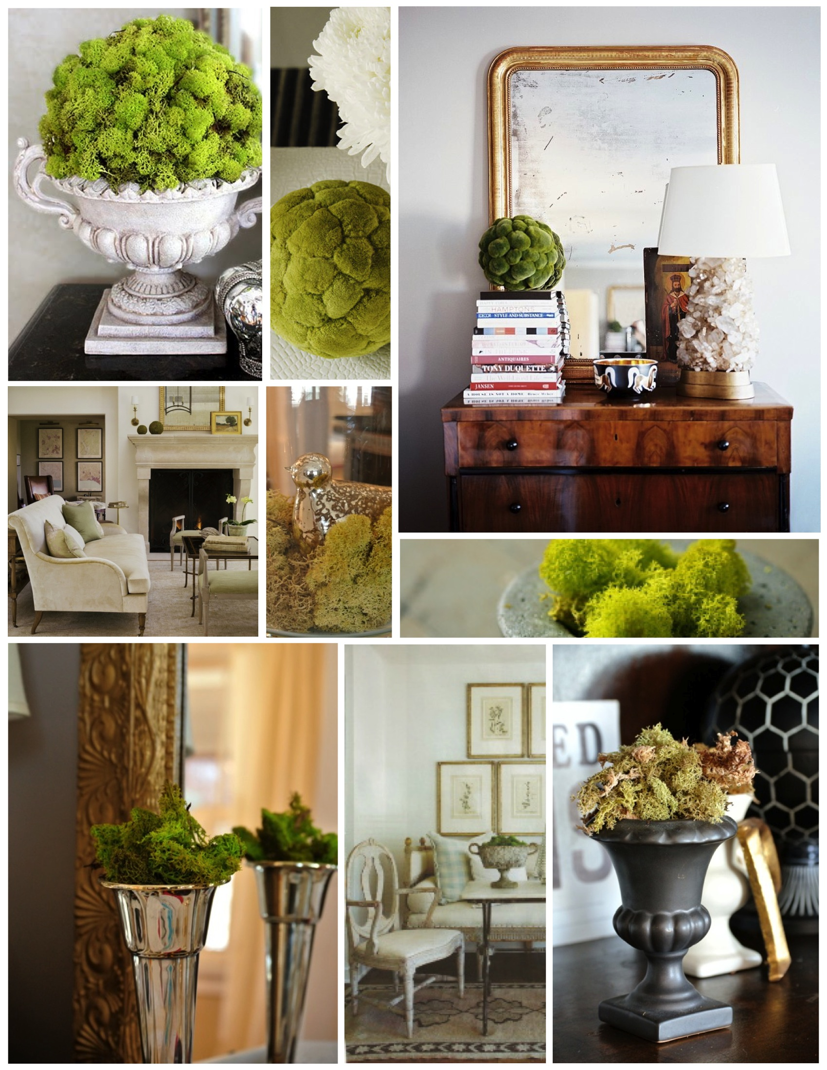Natural Arrangements Of Green Moss Within The Interior House Appeal
