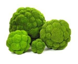 """""""SUPERMOSS"""" Moss Balls:  100% Natural Moss"""