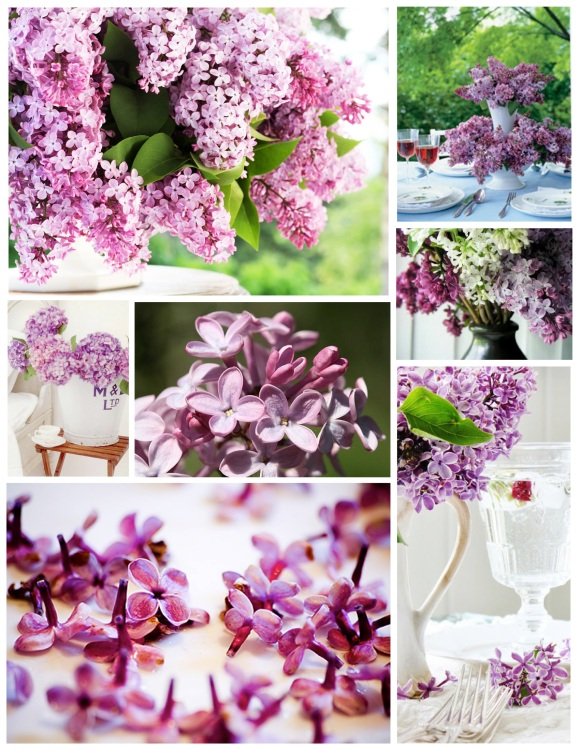 Lilac Infusion:  Fragrance & Beauty