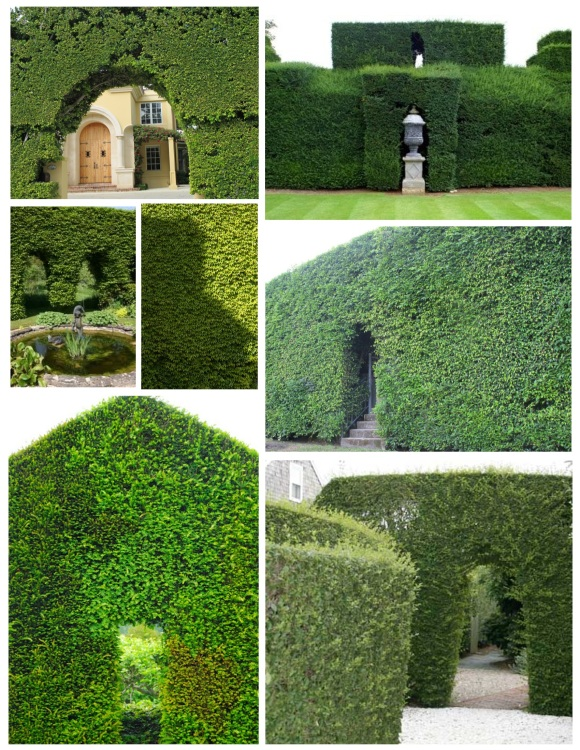 Natural Walls & Openings Of Shaped Greens:  The Hedge