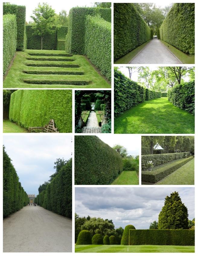 Cultivation Of Distinction:  Hedges