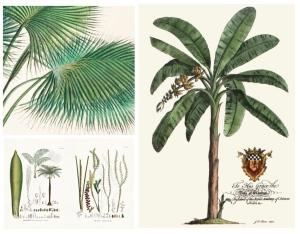 Botanical Distinction Of Enormous Diversity:  The Palm