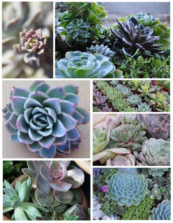 Texture & Color:  The Distinction Of Succulents