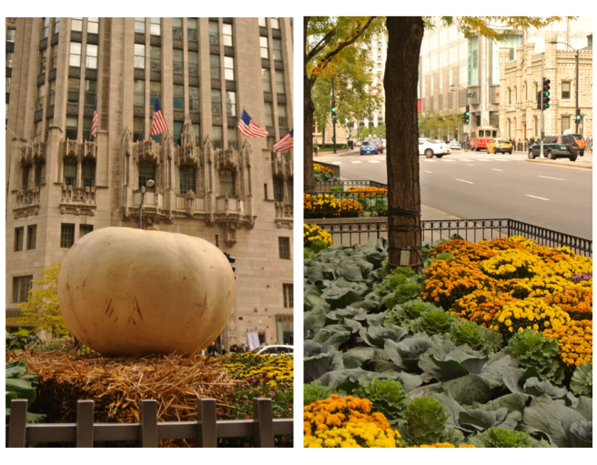 Seasonal Delights WIthin The City Scape:  Chicago In October
