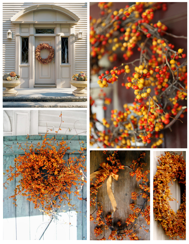 Natural Embellishments:  American Bittersweet Vines Of  Autumn Delight