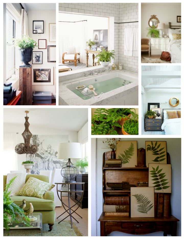Layered  & Feathered Leaves Of  Green:  Ferns Allure Within Interior Spaces