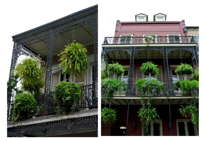 Dripping In Ferns/New Orleans/French Quarter