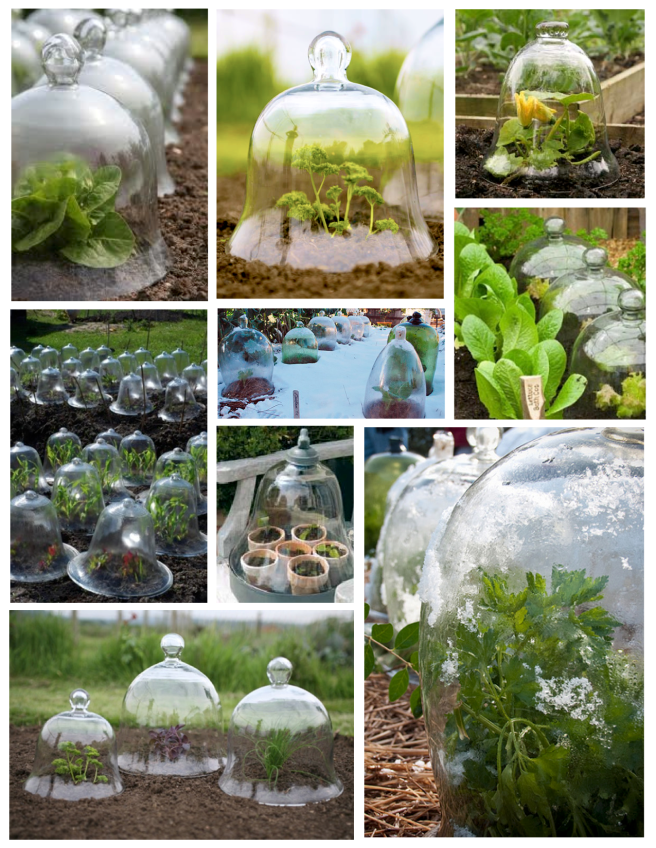 "Early Garden Delights:  Transparent Plant Cover ""Cloches"""