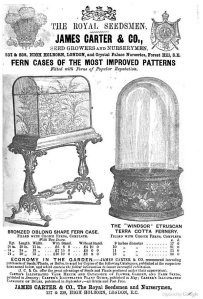 Victorian Embellishments:  Fern Cases