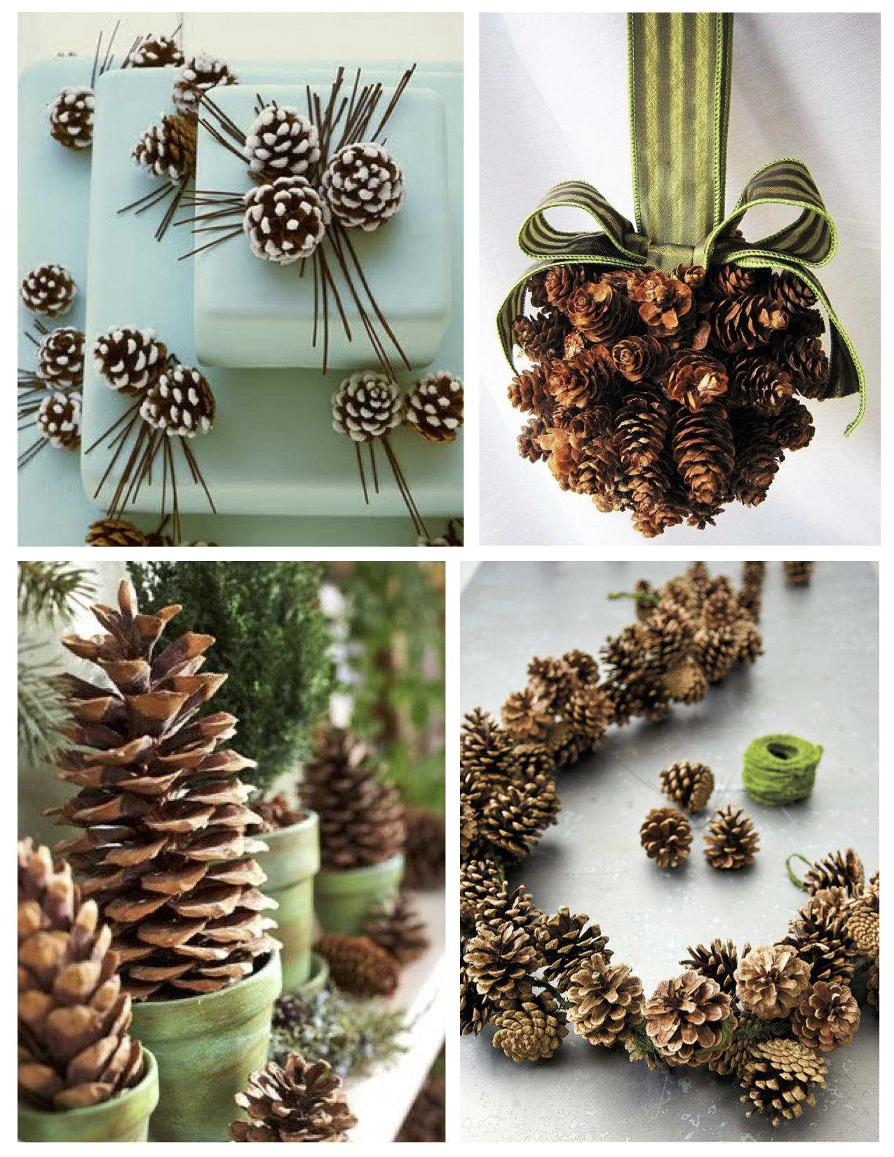 Woody delight the decoration of the venerable pine for Decoration nature