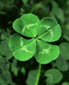 "The ""Four Leaf Clover"": Irish Luck Awaits..."