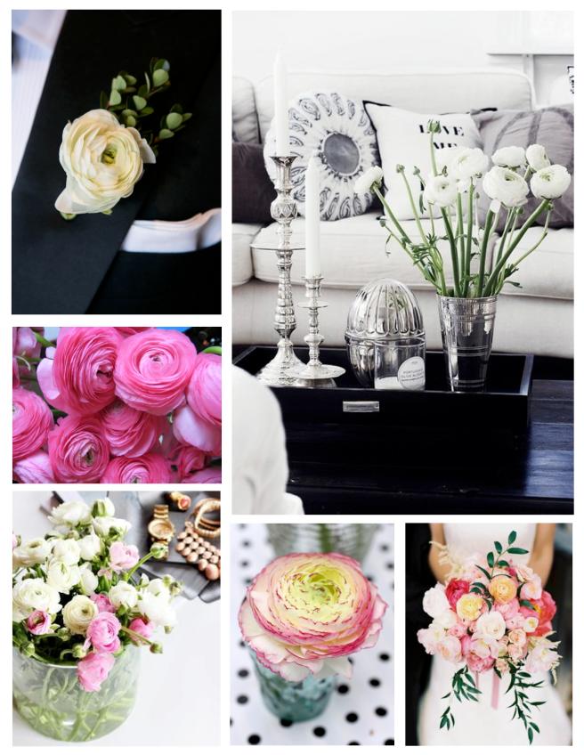 Ranunculus Flowers:  Blooms Of Sweet Elegance