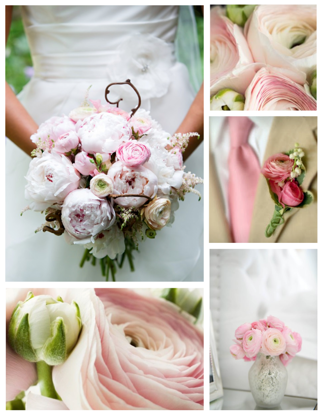 Soft & Sweet:  Layered Delight Of Ranunculus Blooms