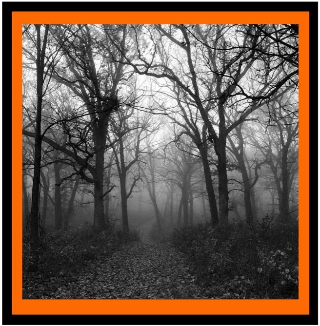 Fog Through The Barren Trees....