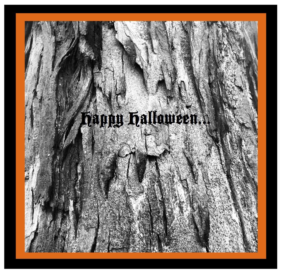 halloween salutations: fog & barren delights of nature | house appeal