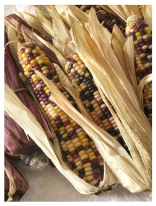 Autumnal Delights: Ornamental Indian Corn