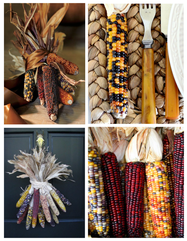 Kernels Of Autumnal Color:  Ornamental indian Corn