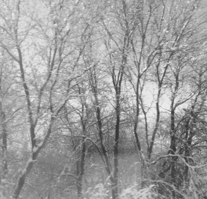 November Snowfall:  Train Window View