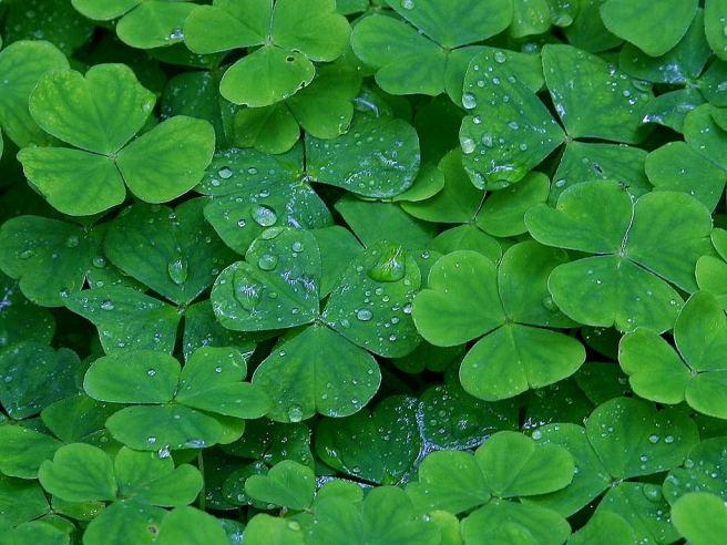 Clover Green:  Irish Cheer & Luck