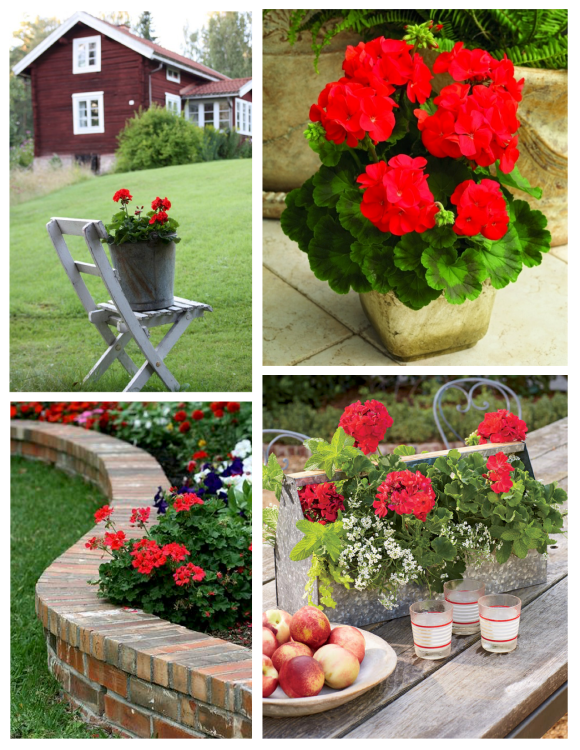 Exterior Appeal In Striking Red:  Geraniums