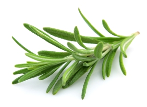 A Scented, Distinctive & Fragrant Herb:  Rosemary
